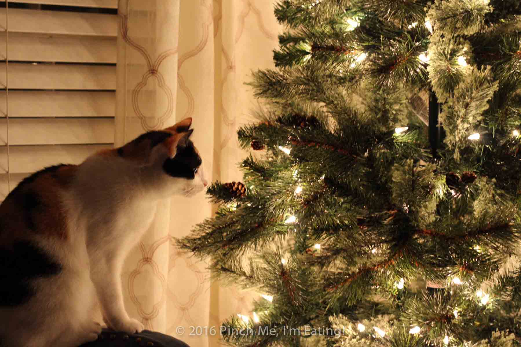 Calico cat looking at Christmas tree with white lights
