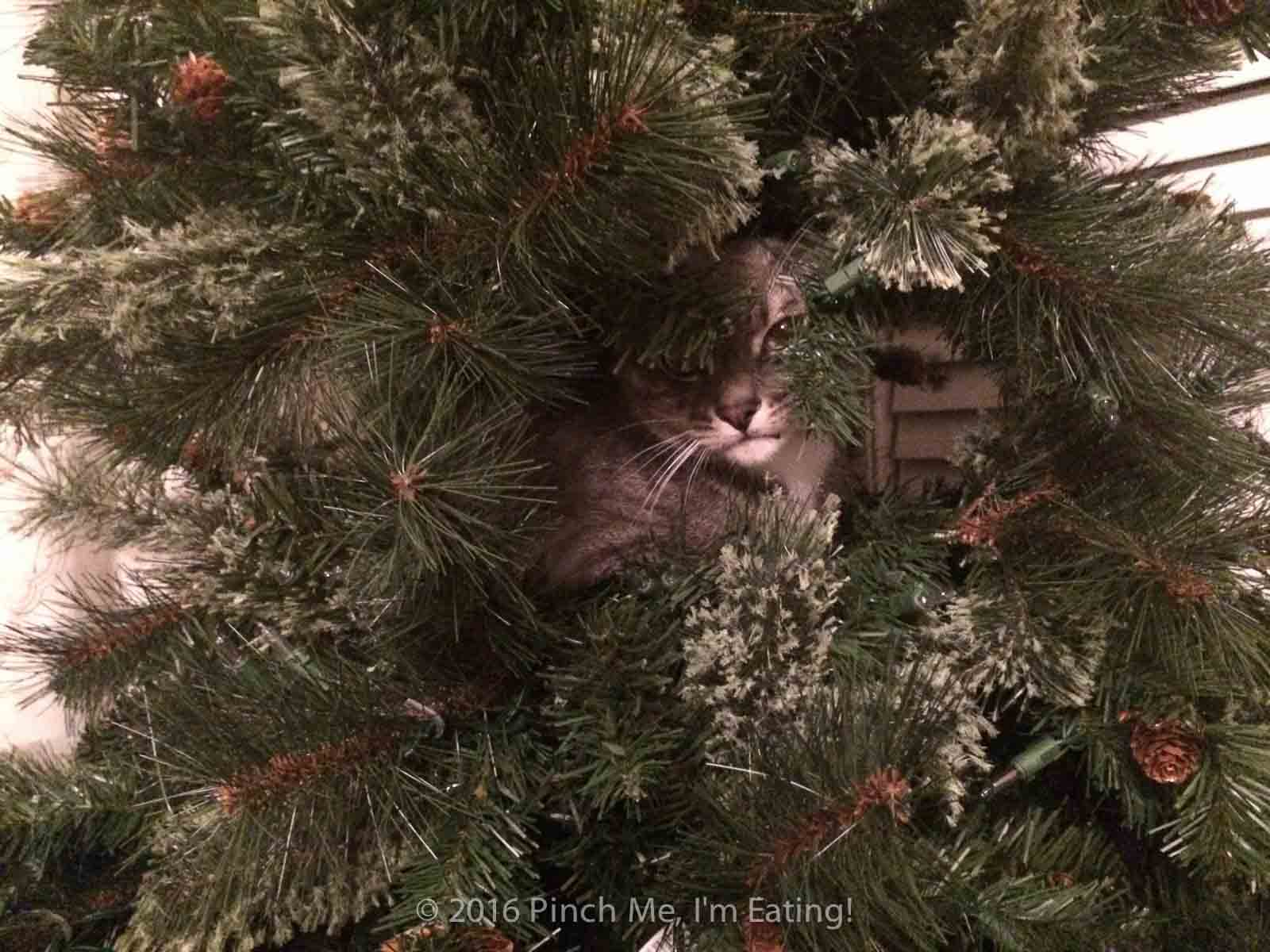 Gray cat hiding in Christmas tree