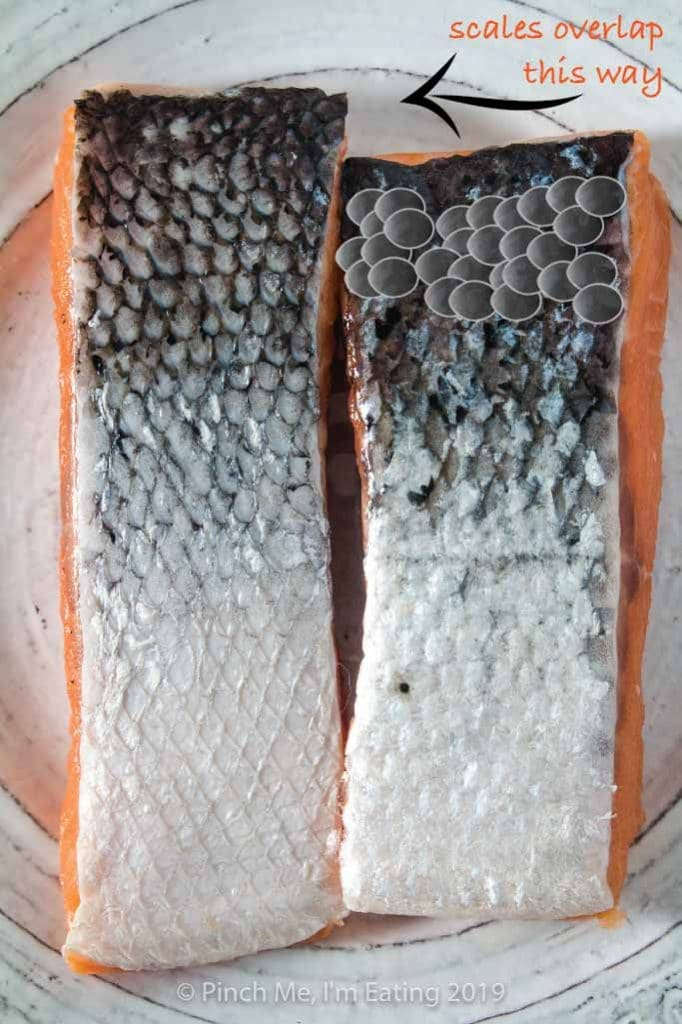 Diagram of scales overlapping on a salmon fillet